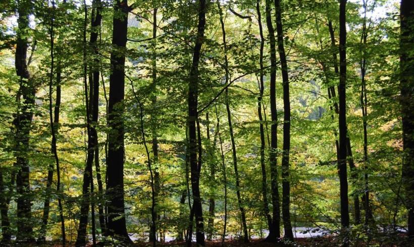 common wood autumn